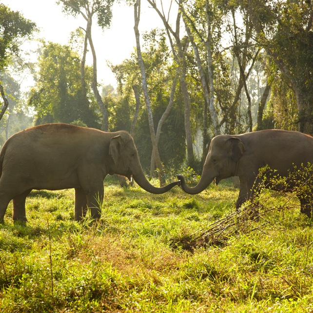 Family adventure vacations, two elephants in the jungle, luxury hotels