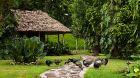 Chan Chich Lodge wildlife