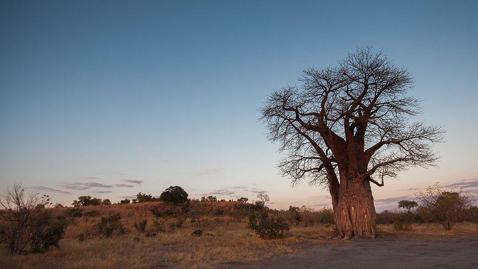 Belmond Savute Elephant Lodge — Chobe National Park, Botswana