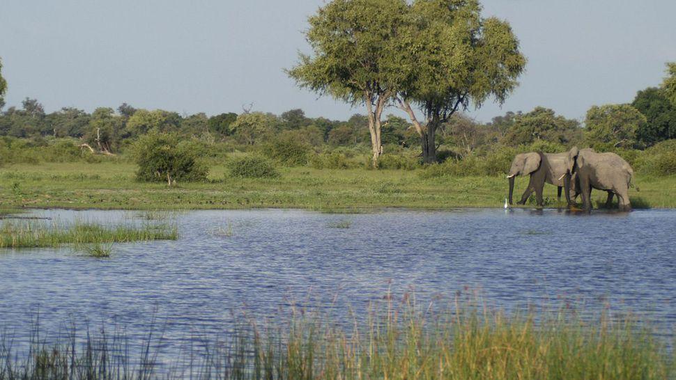 Vumbura Plains — Moremi Wildlife Reserve, Botswana