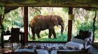 See more information about Sanctuary Makanyane Safari Lodge bedroom with elephant in front