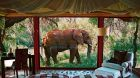 Guestroom with elephant in front
