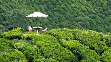 Cameron Highlands Resort - Cameron Highlands, Malaysia