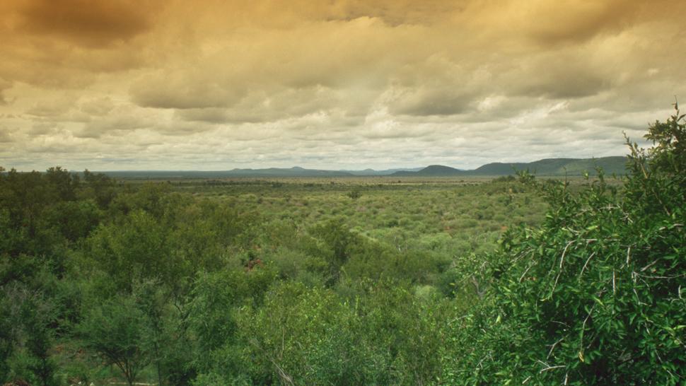 Madikwe Hills Private Game Lodge — Madikwe Game Reserve, South Africa