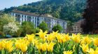 Hotel exterior yellow tulips