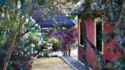 Hacienda de San Rafael gardenHsr garden 8.