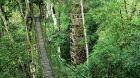 Wood bridge through trees