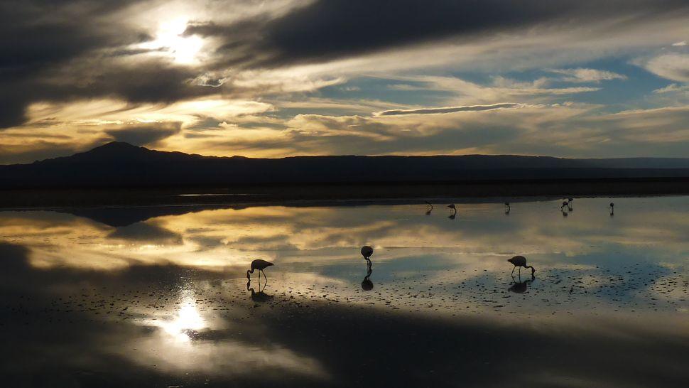 Awasi — San Pedro de Atacama, Chile