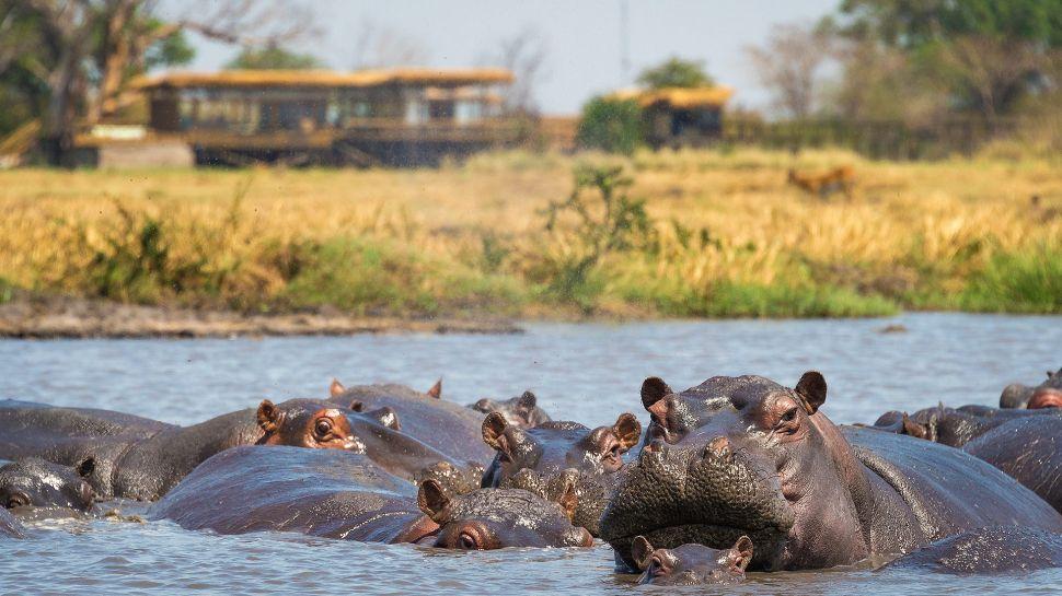 Shumba Camp — Kafue National Park, Zambia