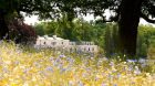 See more information about Coworth Park exterior summer wild flowers meadow