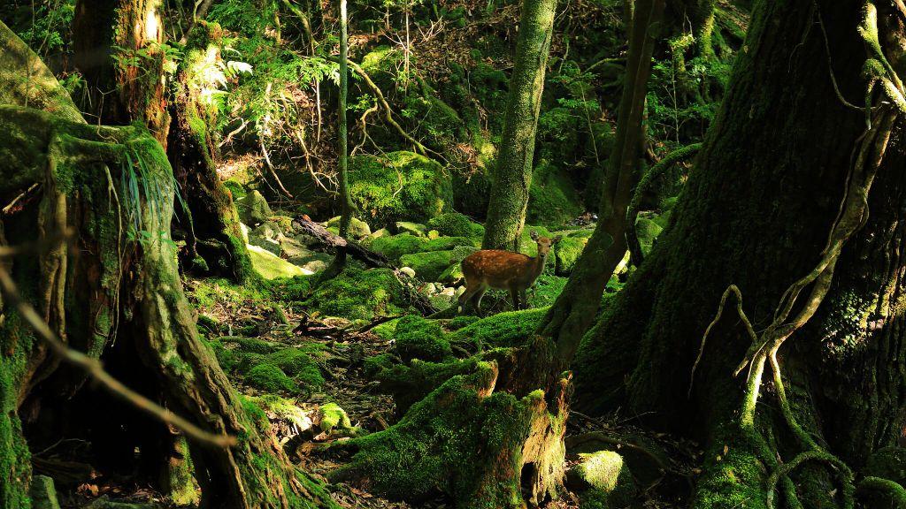 Wildlife At Sankara Nature Yakushima