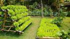 Hotel vegetable garden.