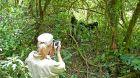 Sanctuary Gorilla Forest Camp gorilla viewing