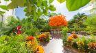 Orange Deck